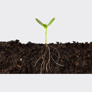 shift11-_0002s_0002_soil-plant-1
